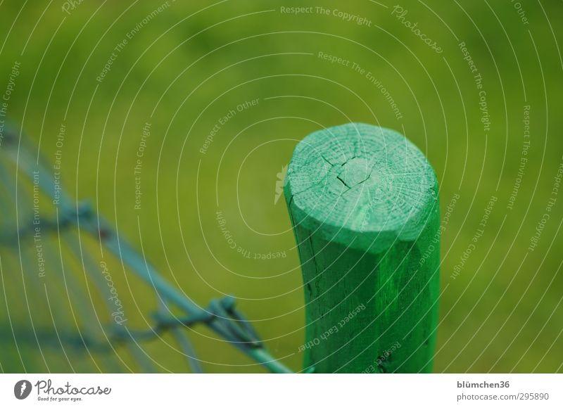 grün \ grün | grün Pflanze Frühling Garten Wiese leuchten stehen einfach Gartenzaun Zaun Zaunpfahl Holz Farbe Begrenzung Holzfaser Maserung Pfosten Drahtzaun