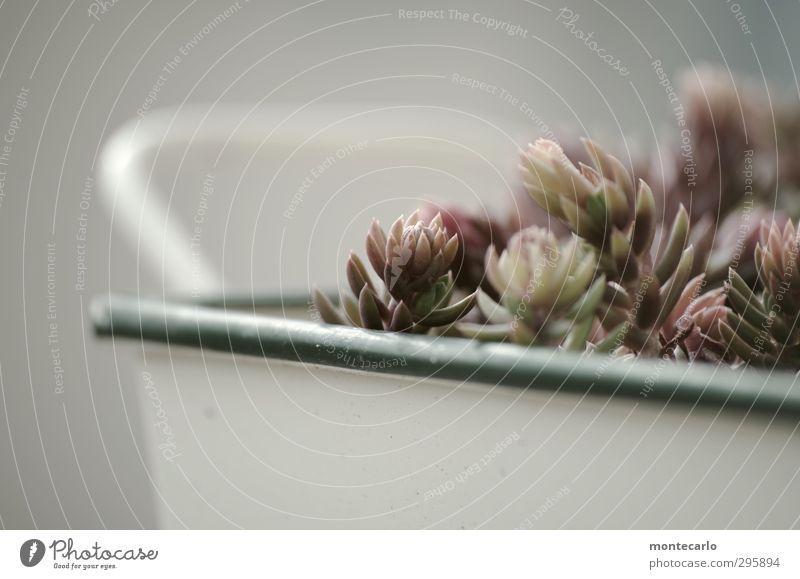 In Bearbeitung.... .... ...... Umwelt Natur Pflanze Frühling Schönes Wetter Grünpflanze Wildpflanze Topfpflanze authentisch einfach frisch klein Spitze weich