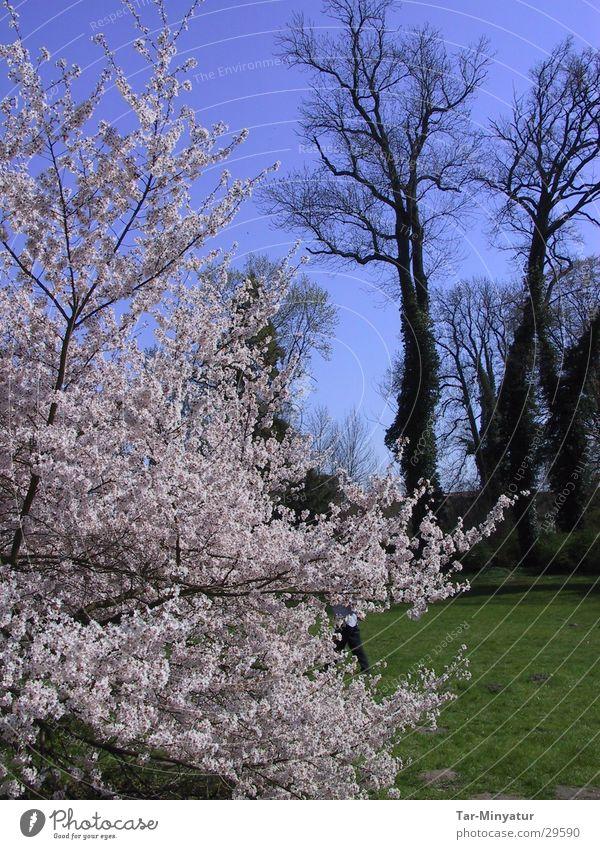 Parkimpression weiß Baum grün Pflanze Herbst Blüte Sträucher fallen Blühend trocken eigenwillig
