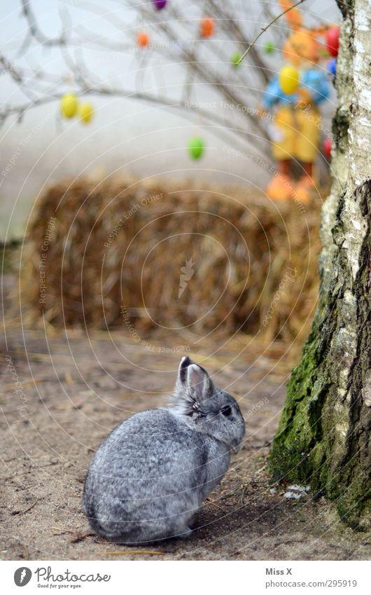 Osterhasi Ostern Frühling Baum Sträucher Tier Haustier 1 klein niedlich Osterhase Osterei Dekoration & Verzierung Hase & Kaninchen Stroh Farbfoto mehrfarbig