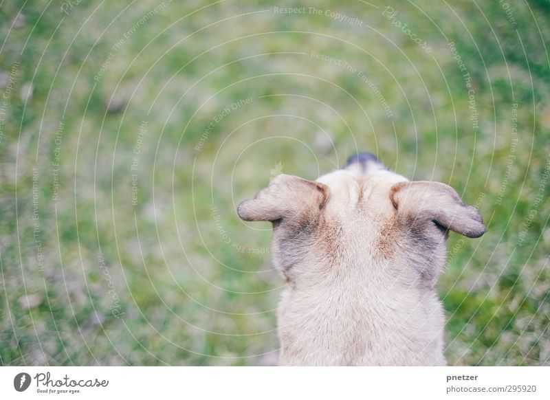 Watch out Umwelt Natur Landschaft Pflanze Gras Garten Park Wiese Tier Haustier Hund 1 Tierjunges beobachten Blick außergewöhnlich frei Unendlichkeit Erholung
