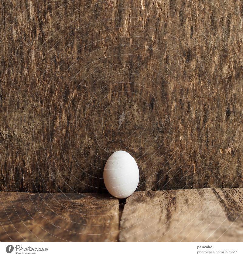 jugendfoto | pränatal Lebensmittel Natur Urelemente Nutztier Vogel 1 Tier Holz Zeichen Beginn entdecken Mittelpunkt Wachstum feminin Ei Hühnerei Küken Geburt