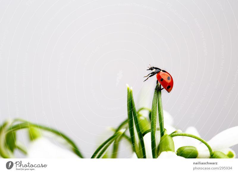 Marienkäfer Pflanze grün schön Blume rot Tier lustig Fröhlichkeit beobachten einfach niedlich Abenteuer berühren Ziel Sehnsucht festhalten