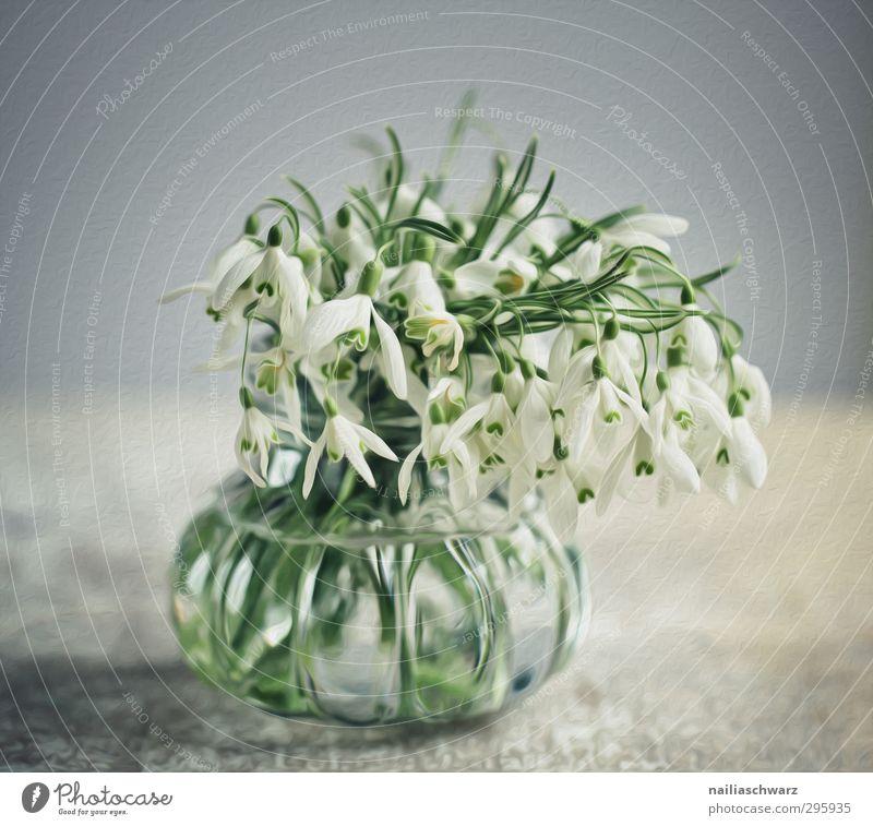 Schneeglöckchen Pflanze Blume Blüte Dose Blumenstrauß Vase Duft verblüht Fröhlichkeit frisch positiv schön blau grau grün Glück Frühlingsgefühle Romantik Idylle