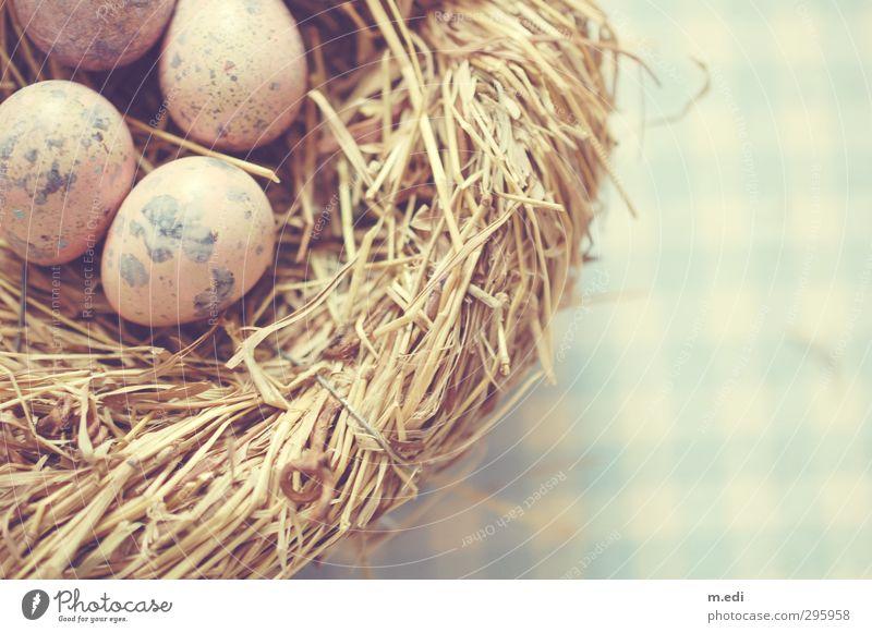 birdy. Natur Tier Vogel Ei Wachtelei Nest hell schön Farbfoto Innenaufnahme