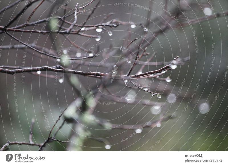 humid. Umwelt Natur Landschaft Urelemente Erde Wasser Wassertropfen ästhetisch Zweige u. Äste Wald Waldlichtung Unterholz Frühling aufwachen Regenwasser kalt