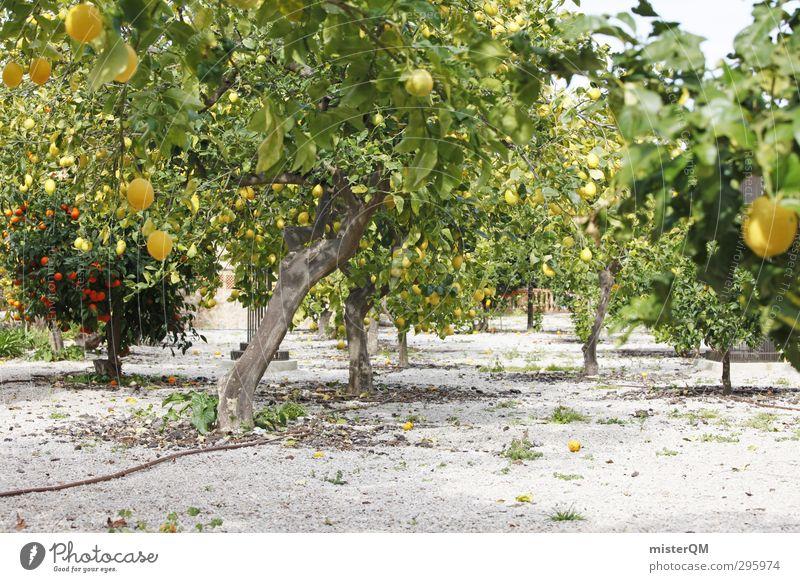 Vitamingarten. Natur Pflanze Landschaft Umwelt Gesundheit Garten Frucht Wachstum Erde Orange ästhetisch Ernte Sommerurlaub reif ökologisch