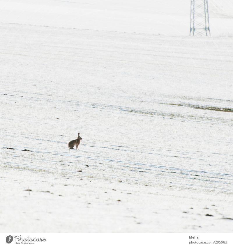 War was? - Ostern verschneit Natur weiß Landschaft Tier Winter Umwelt kalt Schnee Frühling Freiheit klein hell natürlich Feld Erde Wildtier