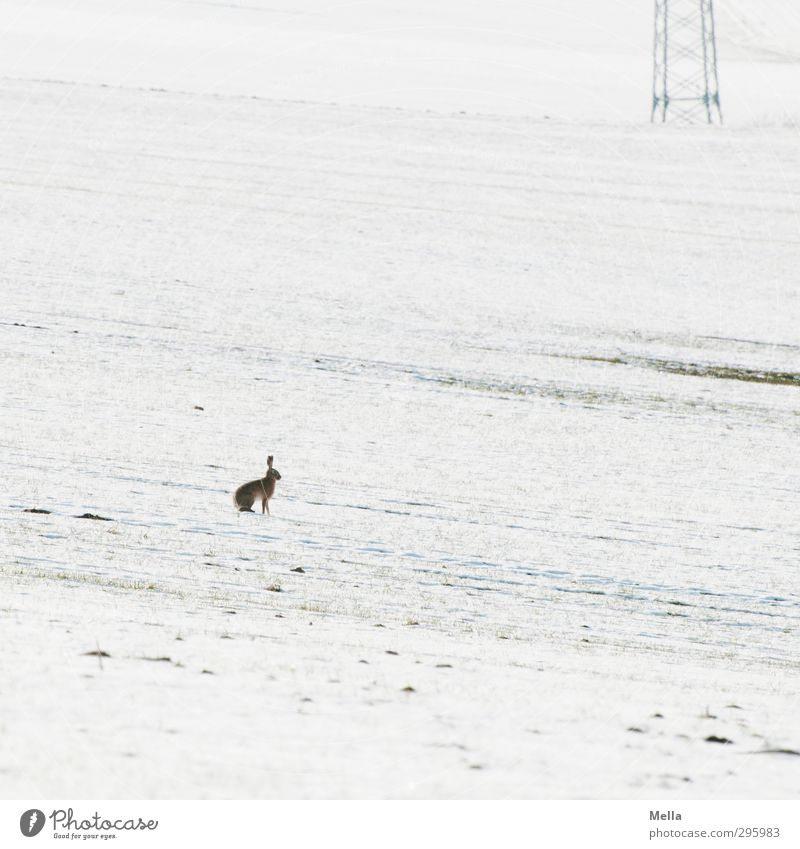 War was? - Ostern verschneit Technik & Technologie Energiewirtschaft Strommast Elektrizität Umwelt Natur Landschaft Tier Erde Frühling Winter Klima Schnee Feld