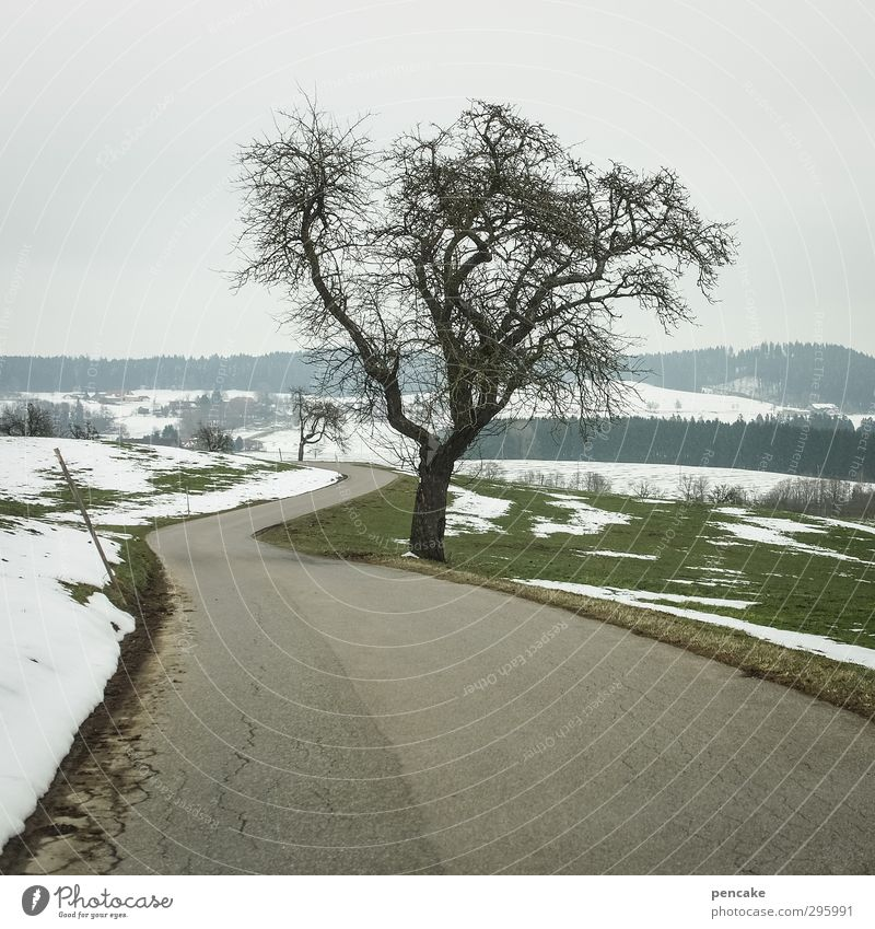 anlauf Natur Baum Landschaft Wald Berge u. Gebirge Straße Leben Schnee Frühling Eis Feld Frost Hügel kahl Vorfreude Geäst