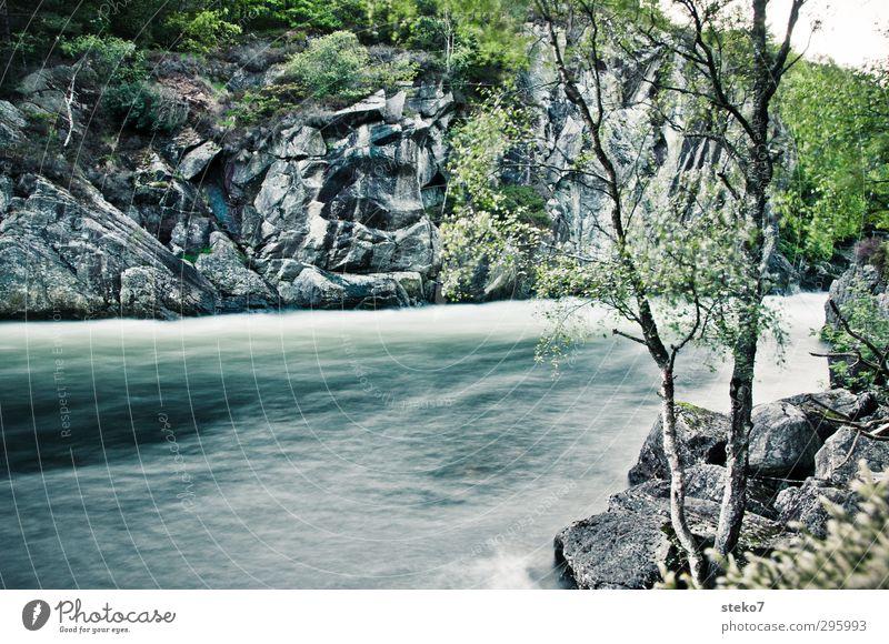 kaltes Wasser Natur Baum Felsen Flussufer Gesundheit natürlich wild blau grau grün Norwegen Farbfoto Außenaufnahme Menschenleer Textfreiraum unten
