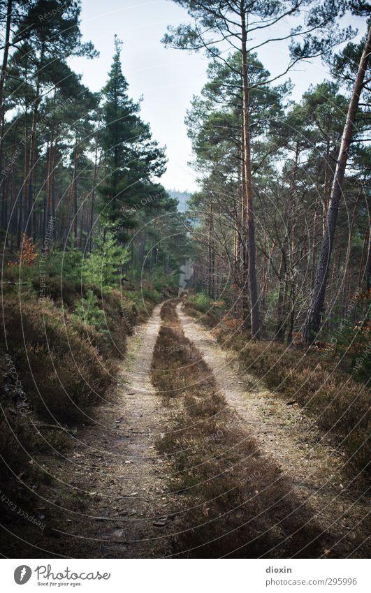 Auf dem Holzweg Ferien & Urlaub & Reisen Ausflug wandern Forstwirtschaft Umwelt Natur Landschaft Pflanze Baum Sträucher Moos Wald Berge u. Gebirge Pfälzerwald