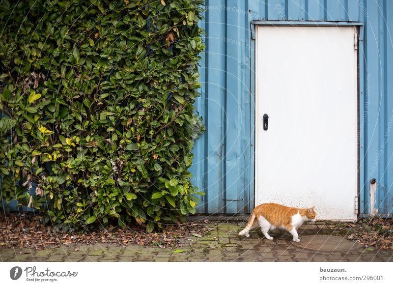 katze ante portas. Katze blau grün Pflanze rot Einsamkeit Tier Wand Wege & Pfade Holz Mauer Gebäude grau Stein Metall Linie