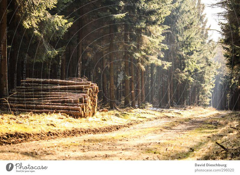 Waldtag Ferien & Urlaub & Reisen Abenteuer Freiheit wandern Natur Pflanze Tier Frühling Sommer Herbst Schönes Wetter Baum blau braun gelb grün schwarz weiß