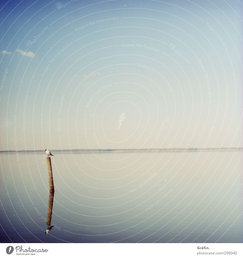 Stille Wasser Wolkenloser Himmel Sonne Frühling Schönes Wetter Küste Seeufer Steinhuder Meer Wildtier Vogel Möwe 1 Tier beobachten Erholung sitzen warten