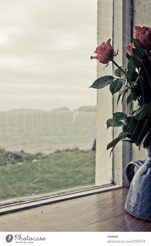 am fensterbrett Häusliches Leben Wohnung Umwelt Natur Landschaft Pflanze Rose Blüte Wellen Küste Bucht Meer ruhig Liebeskummer Fernweh Einsamkeit Fenster