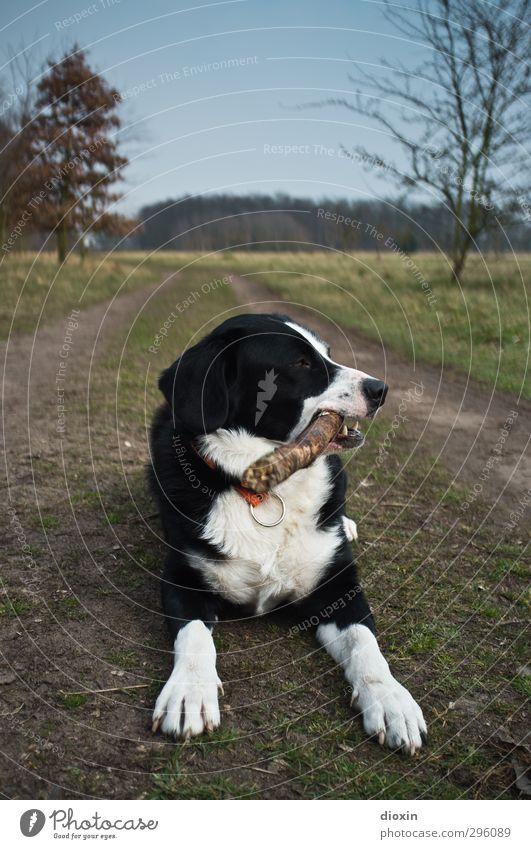 Tiefenpsychologisch gesehen... Umwelt Natur Landschaft Erde Baum Gras Stock Wiese Weide Heide Wege & Pfade Tier Haustier Hund 1 liegen kuschlig natürlich