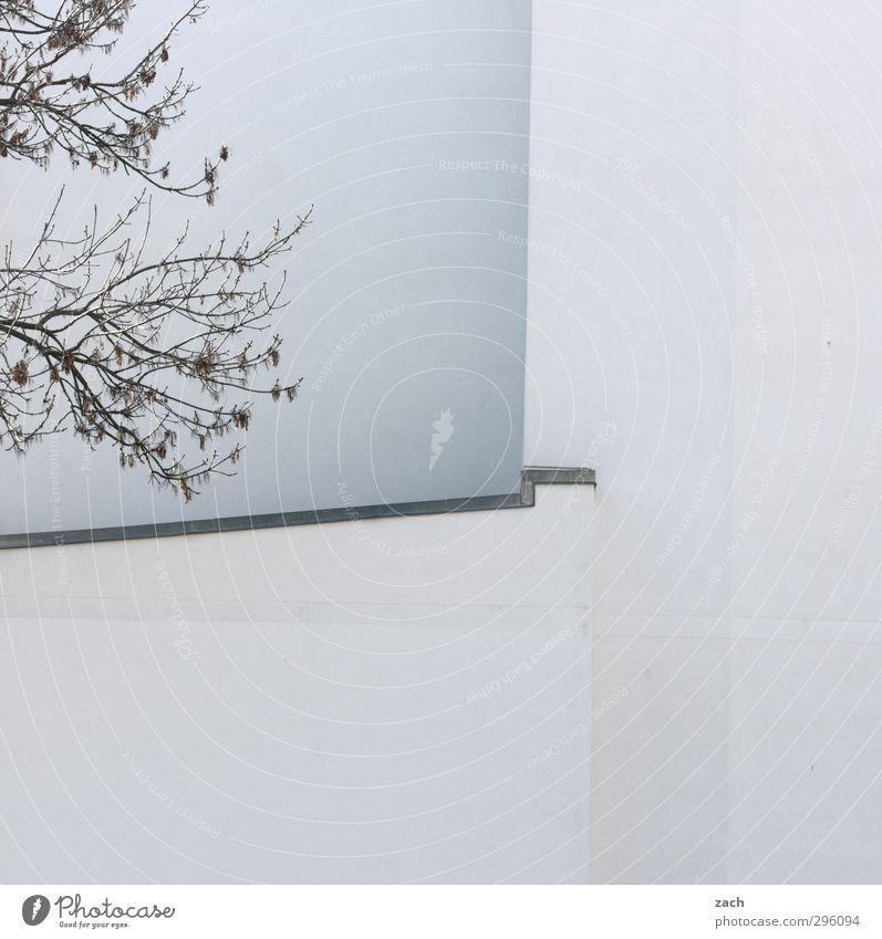 mehr grau als weiß Herbst Winter Baum Ast Zweig Blatt Stadt Haus Gebäude Architektur Fassade Beton Häusliches Leben Linie Gedeckte Farben Außenaufnahme