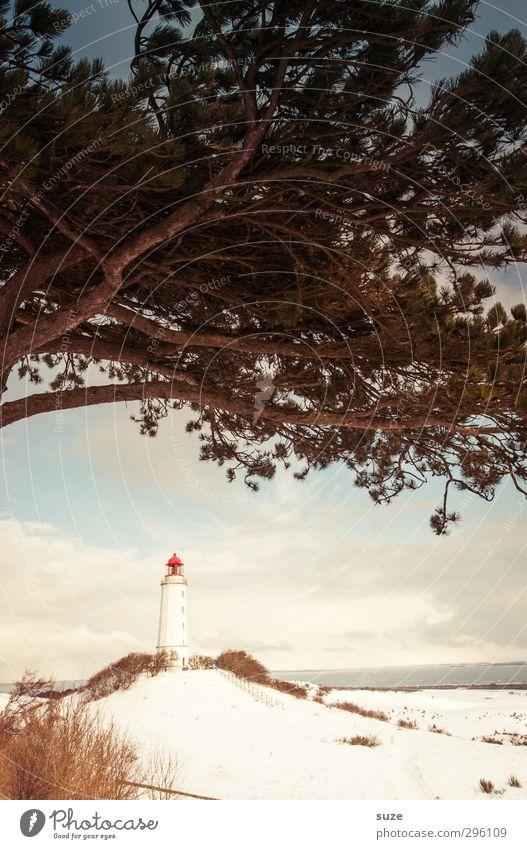 Der Hut steht ihm gut Himmel Natur Baum Meer Einsamkeit Landschaft Wolken Winter Strand Umwelt Küste Horizont Wetter Klima Insel Schönes Wetter