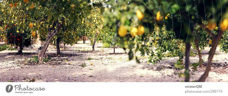 Zitronen-Panorama. Natur Pflanze grün Baum Landschaft Umwelt Gesundheit Zufriedenheit Idylle ästhetisch fantastisch viele Sommerurlaub Süden ökologisch abgelegen