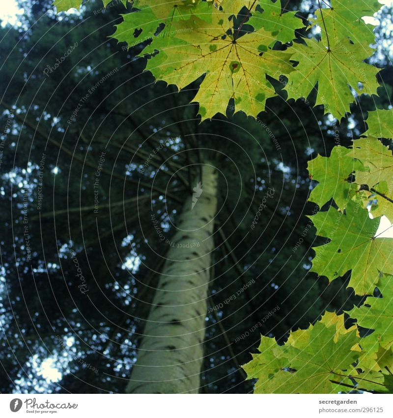 grün, grün, grün sind alle meine blätter.... Natur grün Pflanze Baum Tier Blatt Umwelt Frühling Tanne Rahmen Durchblick