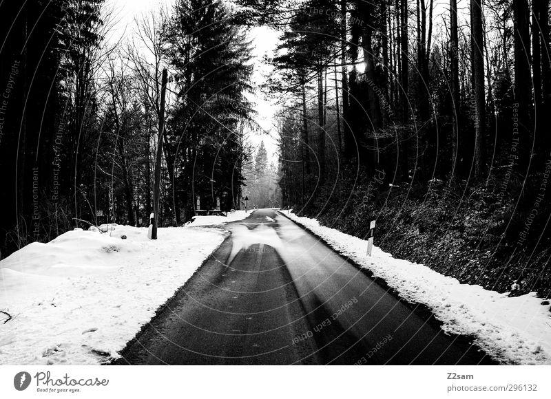 allein auf weiter flur Einsamkeit ruhig Winter Wald Umwelt dunkel kalt Schnee Straße Traurigkeit Wege & Pfade Horizont wandern nass gruselig Verkehrswege