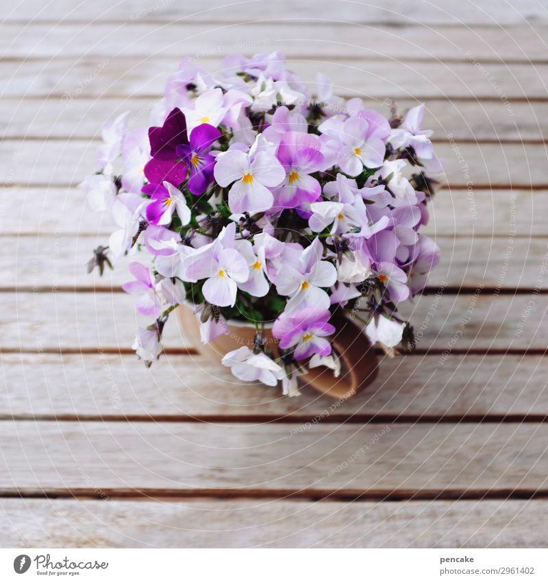 blumig Tasse Frühling Pflanze Blume Blüte Idee Leichtigkeit Mittelpunkt Natur ruhig schön Dekoration & Verzierung Holztisch Hornveilchen Blumenstrauß Café