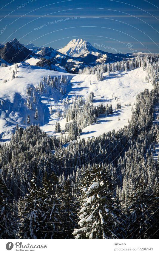 hinter den Bäumen ... Landschaft Winter Schönes Wetter Eis Frost Schnee Baum Wald kalt blau weiß Freiheit Schwyberg Aussicht Berge u. Gebirge Alpen Farbfoto