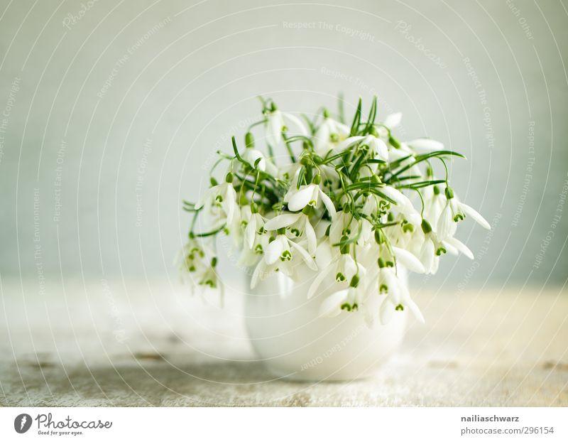 Stilleben mit Schneeglöckchen Frühling Blume Vase Blumenstrauß Duft Fröhlichkeit frisch natürlich positiv schön grün weiß Frühlingsgefühle Romantik elegant