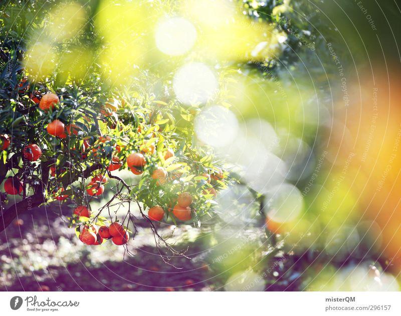 orange sparks. Natur grün Baum Blatt Kunst Garten Zufriedenheit Wachstum Orange ästhetisch Spanien Ernte Mallorca ökologisch Vitamin
