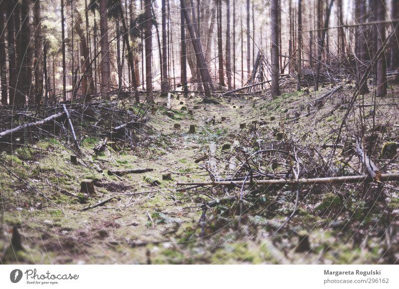 märchenwald Natur grün Einsamkeit Landschaft Blatt Wald Umwelt Leben Gras braun rosa Sträucher trocken Unwetter Moos
