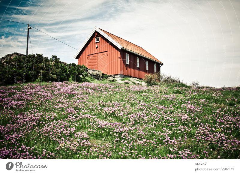 roter Schuppen Natur Sommer Blume Wiese Haus Garten natürlich grün Einsamkeit Norwegen Holzhütte Farbfoto Außenaufnahme Menschenleer Tag