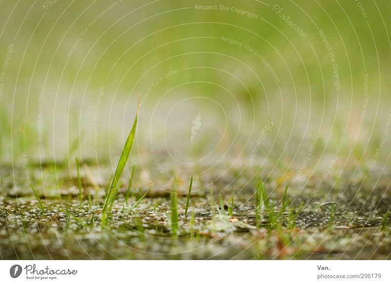 Komm raus, Frühling! Natur Pflanze Erde Gras Halm Garten Wachstum frisch klein grün zart Farbfoto Gedeckte Farben Außenaufnahme Nahaufnahme Menschenleer Tag