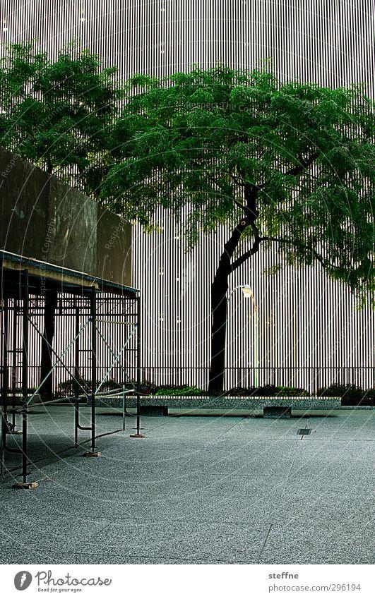 naturban Baum Chicago USA Stadt Stadtzentrum Fassade Natur Gerüst Laterne Pflanze Farbfoto