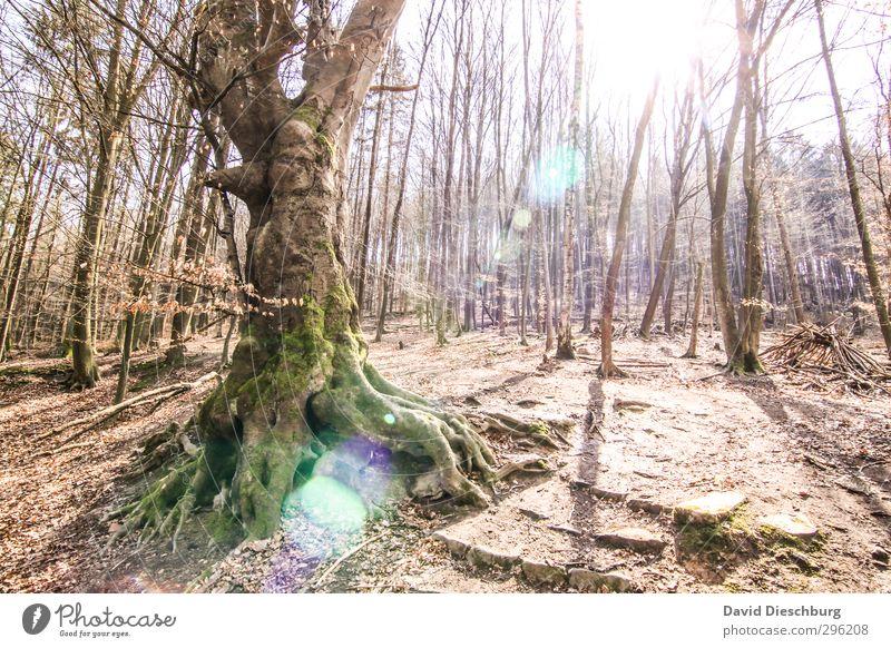 Noch blattlos... Ferien & Urlaub & Reisen wandern Natur Landschaft Pflanze Tier Frühling Sommer Herbst Schönes Wetter Baum Wald braun gelb grün weiß Laubwald