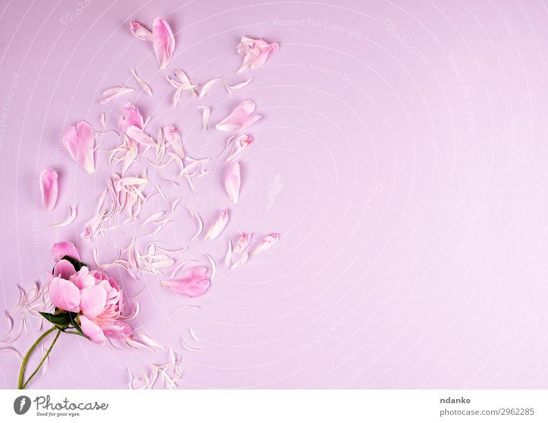 Natur Sommer Pflanze Farbe schön Blume Blatt Blüte natürlich Feste & Feiern rosa Dekoration & Verzierung frisch Romantik Blühend Hochzeit