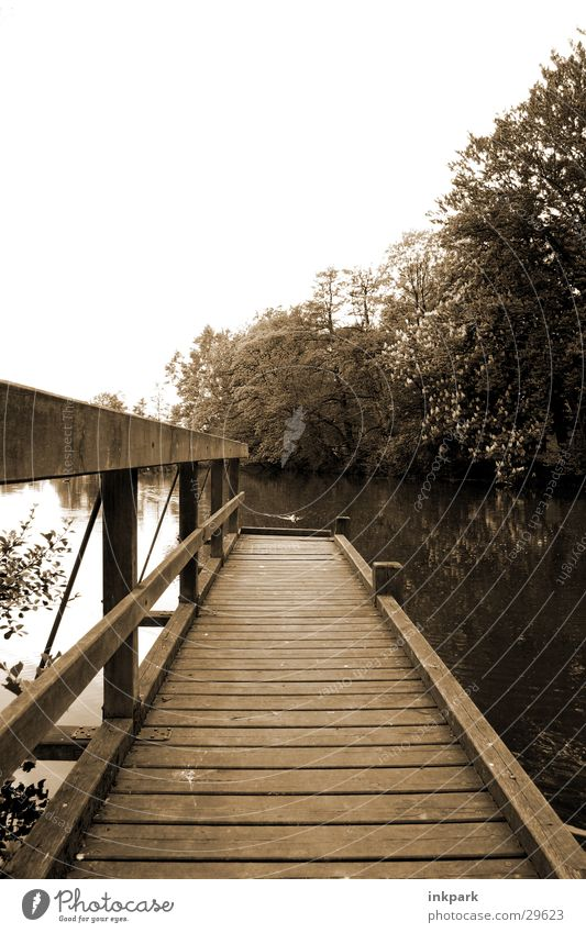 Weit bis ins Wasser Baum Holz trist Steg Schönes Wetter Teich