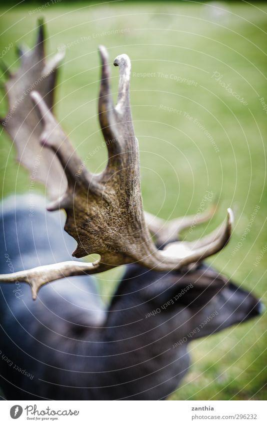 Geweih Natur Tier Umwelt Deutschland Park Kraft bedrohlich Horn Aggression Hirsche