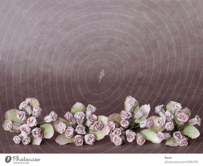 roses are red ... schön harmonisch Pflanze Frühling Sommer Blume Rose Blatt Blüte Papierblume Papierrose Blühend dehydrieren alt einfach natürlich braun grün