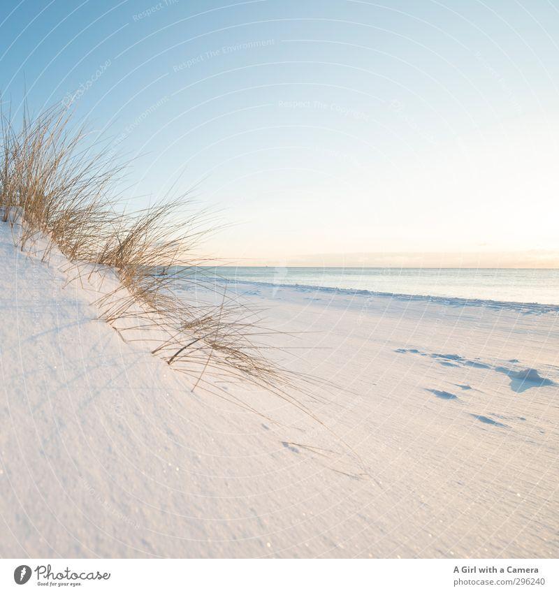 pure Natur Landschaft Pflanze Sand Winter Schönes Wetter Schnee Strand Ostsee Meer Zingst Darß Weststrand hell weich sanft Gedeckte Farben Außenaufnahme