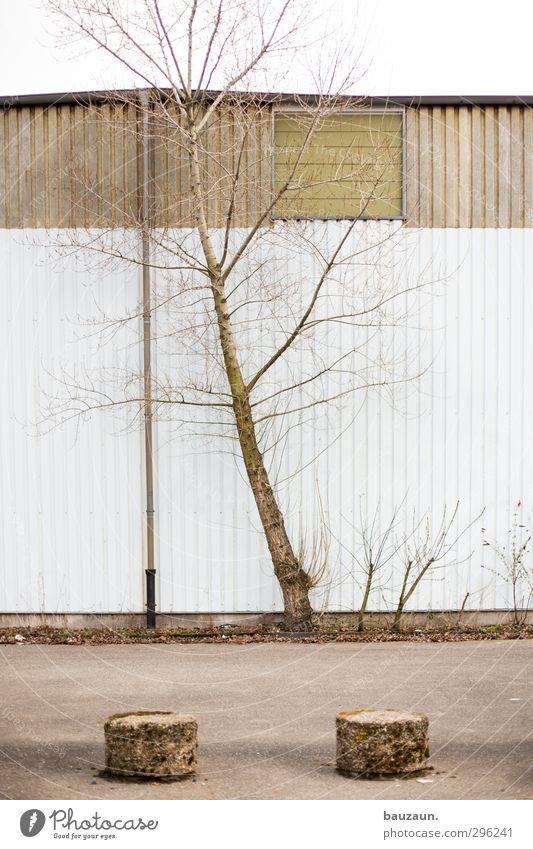 ziemlich schräg. Natur weiß Pflanze Baum Umwelt Wand Straße Wege & Pfade Holz Mauer Gebäude grau Stein Wetter Fassade Wind