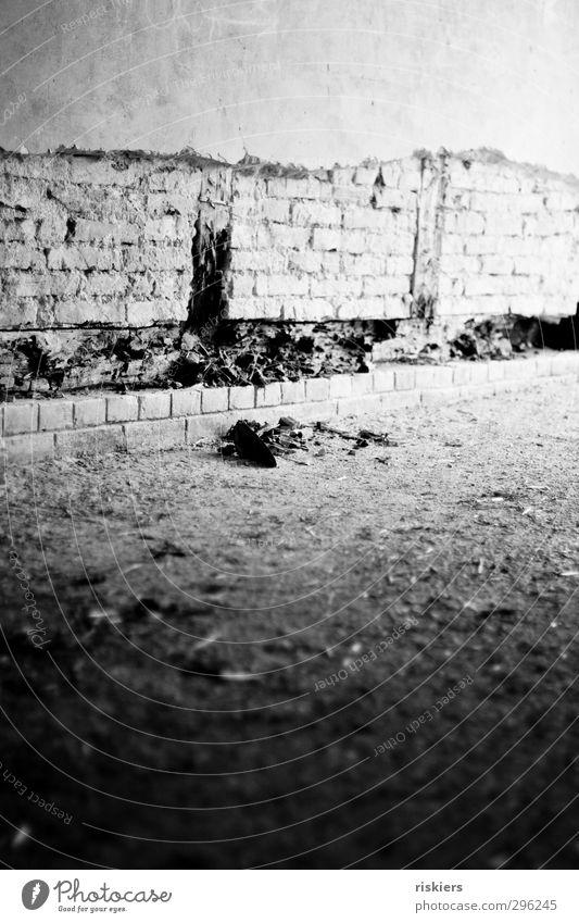 verfallen alt Stadt Wand Mauer Fassade authentisch kaputt Vergänglichkeit Wandel & Veränderung historisch Vergangenheit Verfall Ende Tunnel Nostalgie Zerstörung
