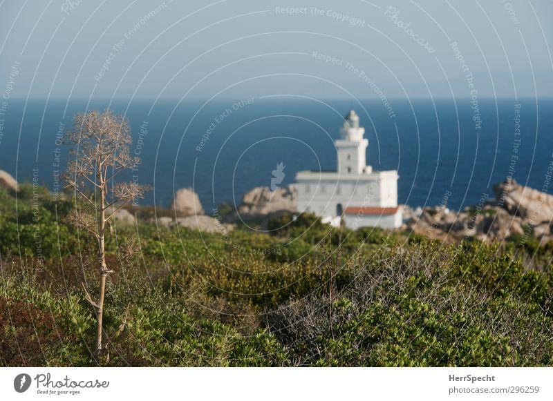 Capo Testa Natur blau Ferien & Urlaub & Reisen grün schön weiß Sommer Pflanze Meer Küste Felsen Schönes Wetter ästhetisch Italien Wolkenloser Himmel Mittelmeer