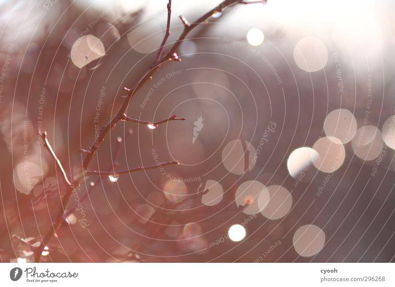 Lichtspiel Natur Wasser Wassertropfen Herbst Winter Pflanze Baum Garten Park Wald berühren glänzend leuchten dunkel frisch hell nah nass rund trocken Wärme grau