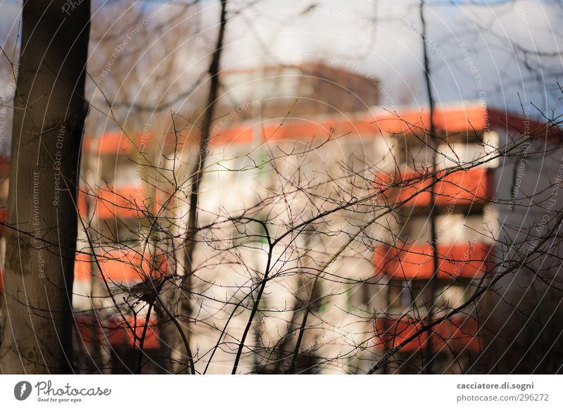 house Stadt Baum Einsamkeit Haus Frühling braun orange Fassade authentisch modern Schönes Wetter Häusliches Leben Perspektive Sträucher Wandel & Veränderung