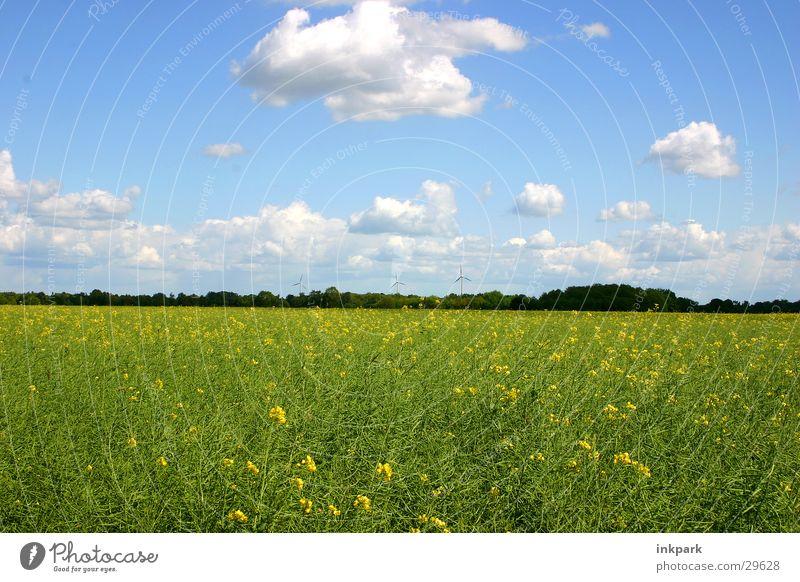 Heiter bis Wolkig Natur Himmel Wolken Wiese Feld Schönes Wetter Raps