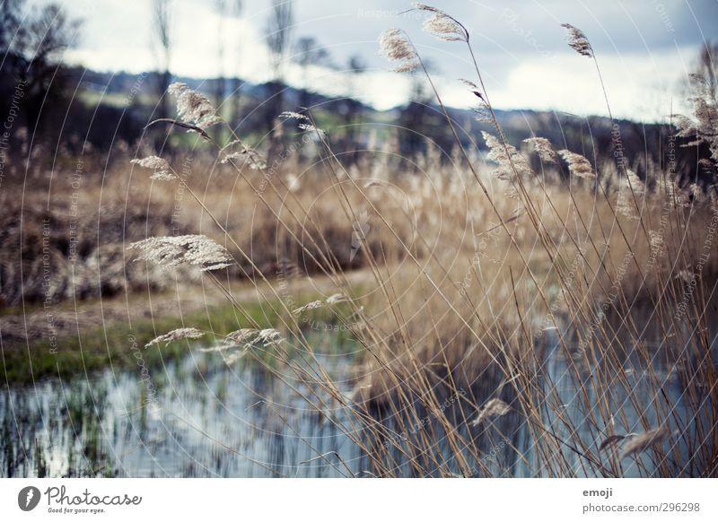 Gräser Natur Landschaft Umwelt Herbst Gras natürlich Wind weich Schilfrohr