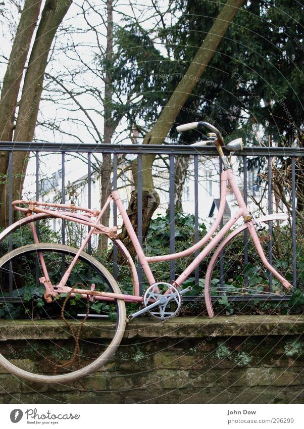uplifting Pflanze Sträucher Stadt Mauer Wand Verkehrsmittel Fahrradfahren alt retro trashig Verfall Vergangenheit Vergänglichkeit Abheben wegwerfen Rost rosa
