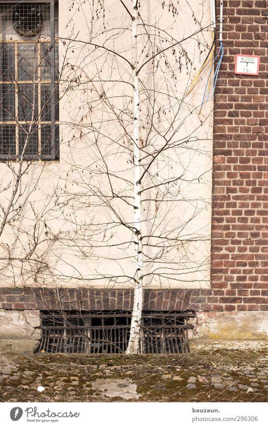 ziemlich wild. alt Pflanze Baum Wand Holz Mauer Stein Garten Metall natürlich Fassade Schilder & Markierungen Wachstum Beton Sträucher