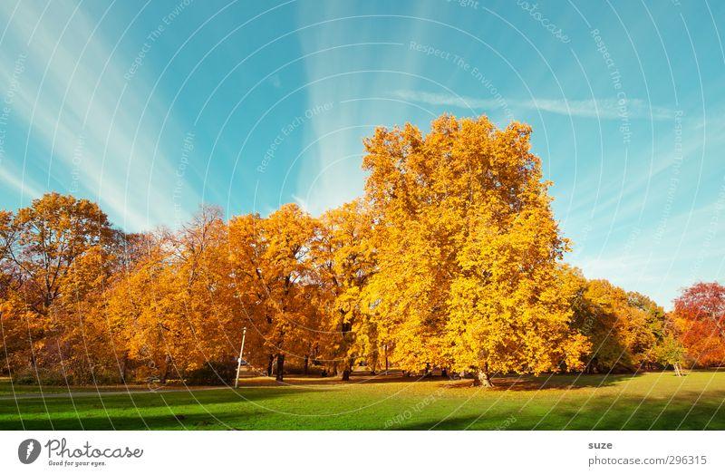 Farbraum Umwelt Natur Landschaft Pflanze Himmel Herbst Klima Wetter Schönes Wetter Baum Park Wiese ästhetisch fantastisch schön blau gelb gold grün herbstlich